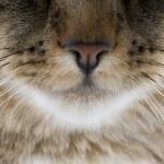 Постер, плакат: Cat Nose