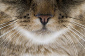 Cat Nose — Stock Photo