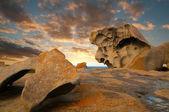 Kanguru Adası — Stok fotoğraf