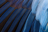 Bird Parrot Feathers — Stock Photo