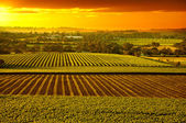 Barossa Vineyards Australia — Stock Photo