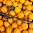 Stock Photo: The citrus harvest