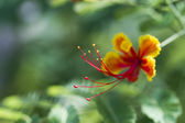 Colorful flowers — Foto Stock