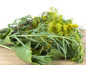 Greens for ferment of products — Stock Photo