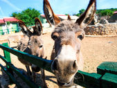 Donkey outdoors — Stock Photo