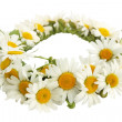 Foto Stock: Wreath of chamomiles