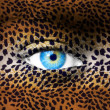 Stock Photo: Human face with animal patterns - Endangered species concept