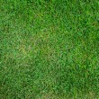 Green grass background — Stock Photo #11161902