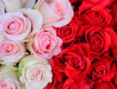 White and red roses background — Stock Photo