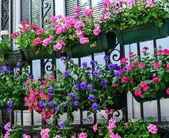 Summerflowers on house window — Stock Photo