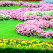 Beautiful flower garden in Schonbrunn palace - Vienna Austria — Stock Photo #11843569