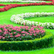 Beautiful flower garden in Schonbrunn palace - Vienna Austria — Stock Photo #11844196