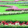 Beautiful flower garden in Schonbrunn palace - Vienna Austria — Stock Photo #11846733