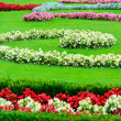 Stock Photo: Beautiful flower garden in Schonbrunn palace - Vienna Austria