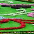 Beautiful flower garden in Schonbrunn palace - Vienna Austria — Stock Photo #11848685