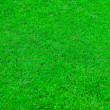 Fresh green grass texture — Stock Photo #11849193