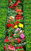 Bellissimo giardino fiorito nel palazzo di schönbrunn - vienna austria — Foto Stock