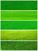 Grass collage — Stock Photo