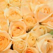 Stock Photo: Cream roses background