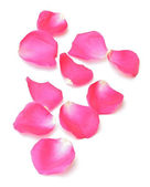 Abstract background of pink rose petals — Stock Photo