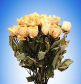 Dried roses bouquet on blue background — Stock Photo