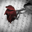 Dry red rose on open music sheet — Stockfoto