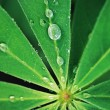 Water drops on fresh green leaf. vintage style — Stock Photo