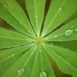 Water drops on fresh green leaf. vintage style — Stock Photo #11858113