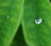 Close-up of green plant leaf — Stock Photo