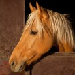 Brown Horse in the Stable — Stock Photo