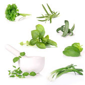 Fresh herbs collection — Stock Photo
