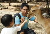 Happy feeding a deer — Stock Photo