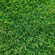 Fresh spring geen grass — Stock Photo