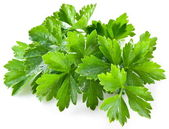 Bunch of green coriander — 图库照片