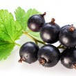 Branch of black currant on a white background. — Stock Photo
