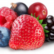 Collection of wild berries - Stock Photo