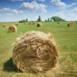 Haystacks on the field — Stock Photo