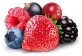 Raccolta di frutti di bosco — Foto Stock
