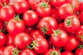 Multitude of ripe tomatoes — Stock Photo