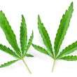 Cannabis leaf isolated - Foto de Stock