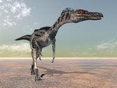 Velociraptor — Stock Photo