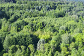 Mixed forest with deciduous and coniferous trees on the hillside — Stock Photo
