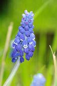 Květiny na hřišti — Stock fotografie