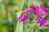 Flowers with bee — Fotografia Stock