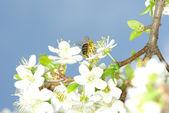 Květiny a včely — Stock fotografie