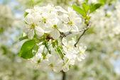 цветы — Стоковое фото