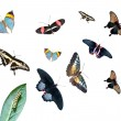 Caterpillar on the leaf, group of different butterflies — Stock Photo