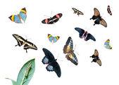 Gąsienica na liściach, grupa różnych motyli — Zdjęcie stockowe