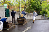 Funchal sleigh rider — Stock Photo