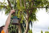 Hanging up a Bird Feeder — Stock Photo